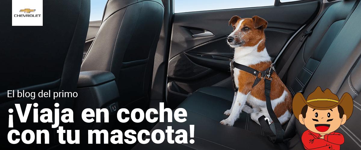 Viaja en coche con tu mascota